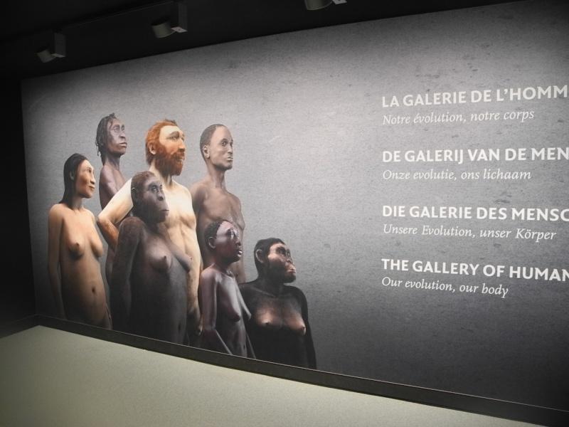 Musée des Sciences  Naturelles de Bruxelles Dscn1211