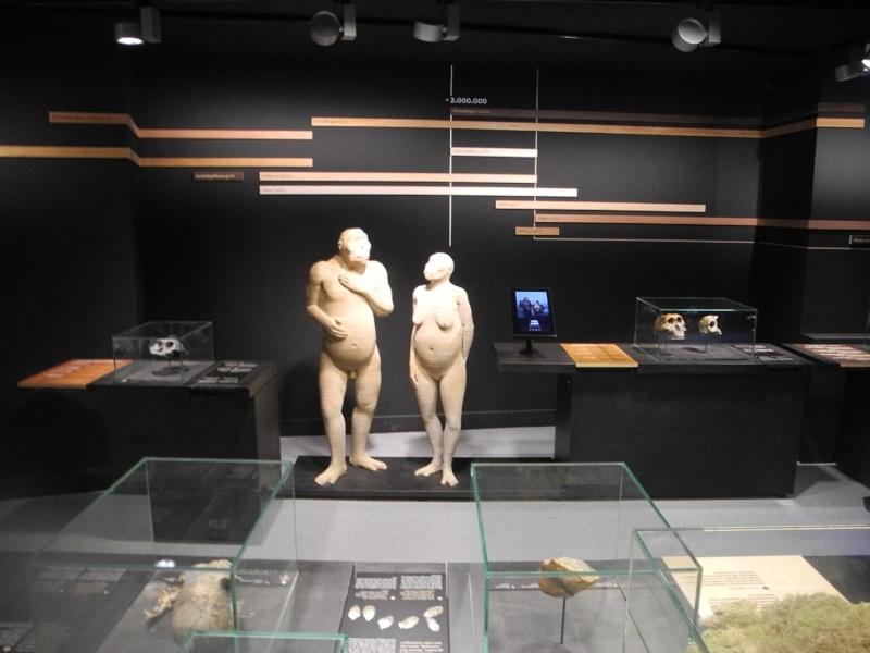 Musée des Sciences  Naturelles de Bruxelles Dscn1212