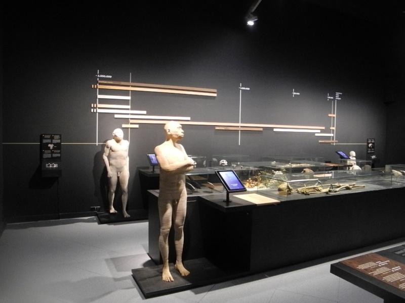 Musée des Sciences  Naturelles de Bruxelles Dscn1214