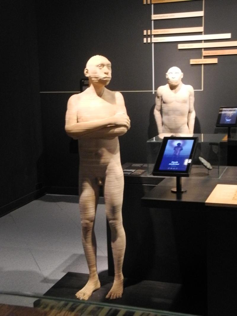 Musée des Sciences  Naturelles de Bruxelles Dscn1215