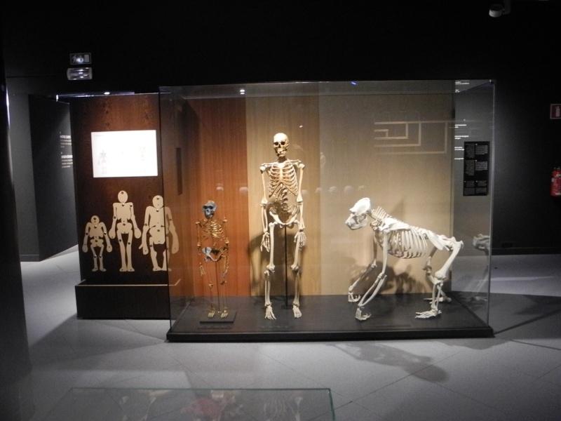 Musée des Sciences  Naturelles de Bruxelles Dscn1217