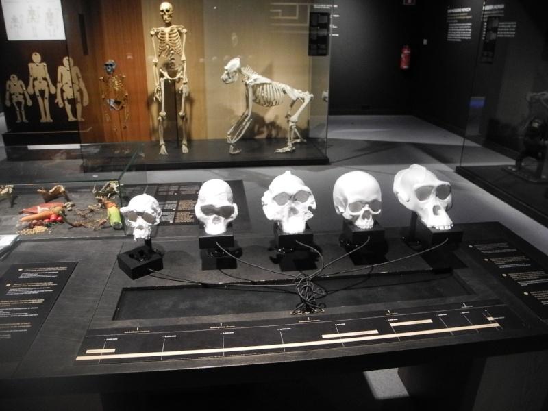 Musée des Sciences  Naturelles de Bruxelles Dscn1218