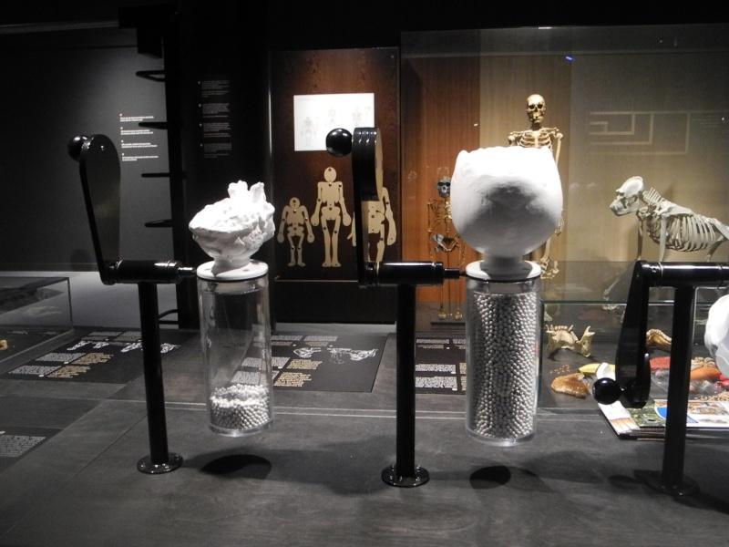 Musée des Sciences  Naturelles de Bruxelles Dscn1220