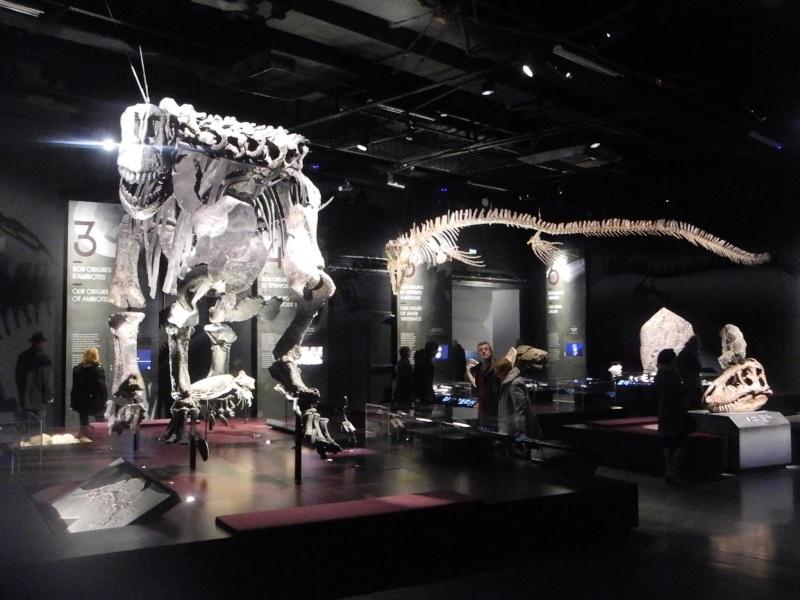 Musée des Confluences à Lyon Dscn1416