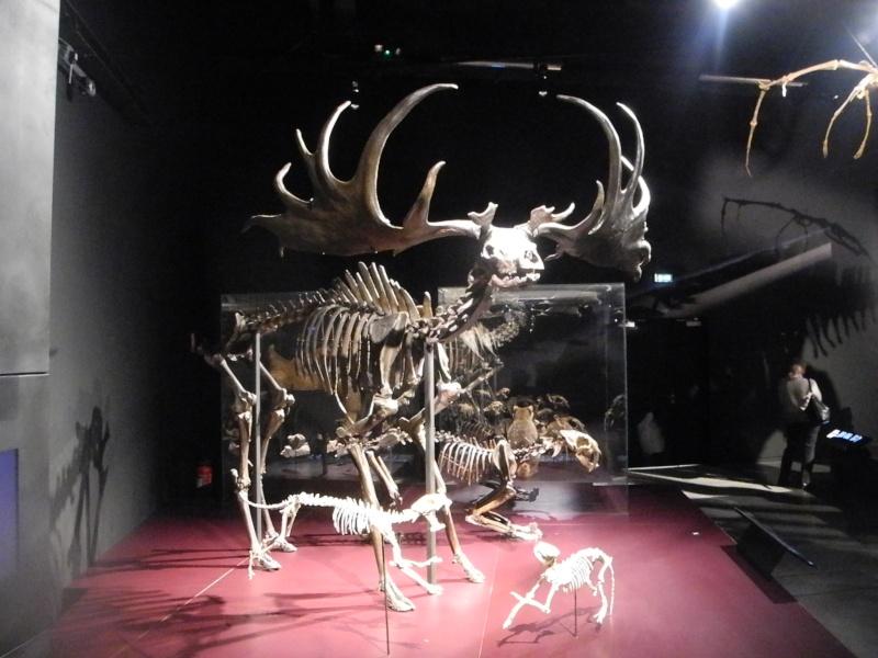 Musée des Confluences à Lyon Dscn1417