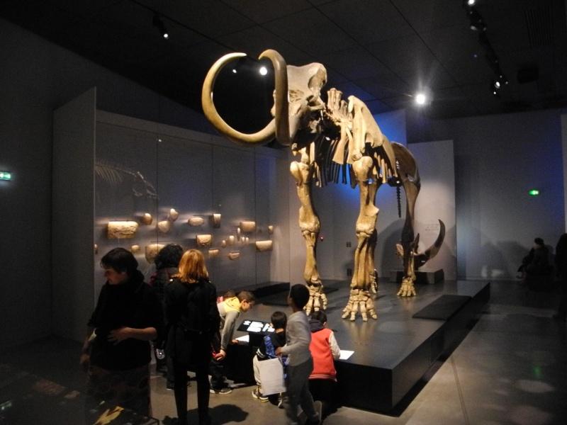 Musée des Confluences à Lyon Dscn1513