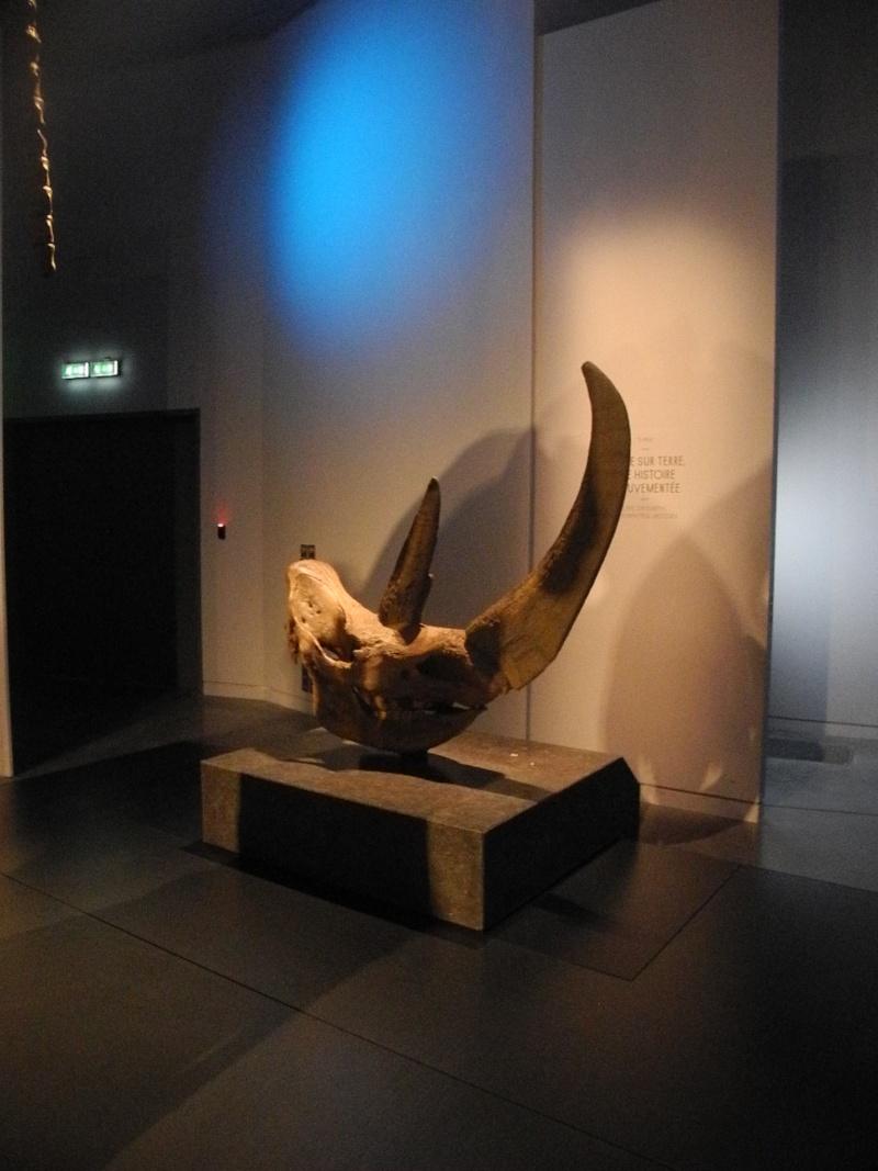 Musée des Confluences à Lyon Dscn1514