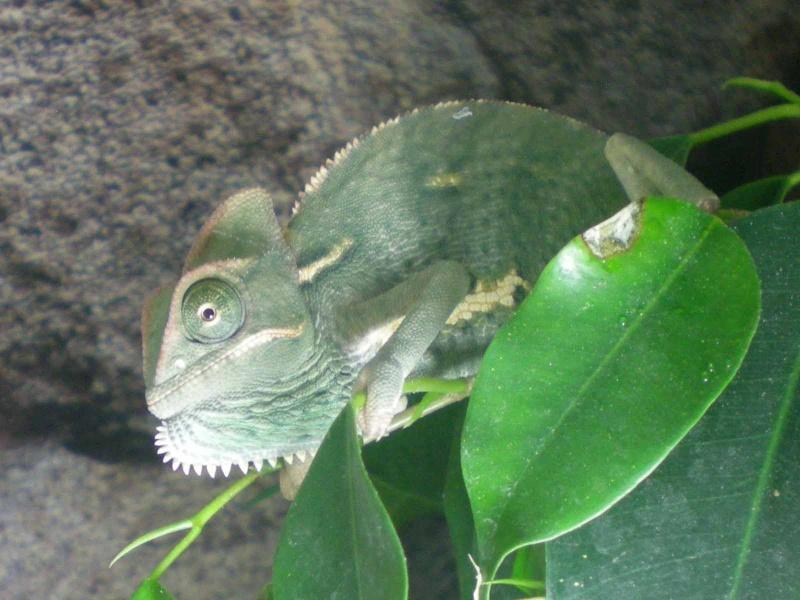Reptiles mais pas tortue Miss_p10