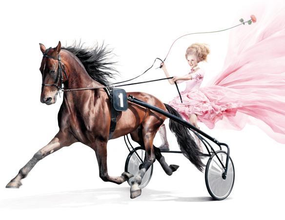 Marie-Antoinette et les courses hippiques Cheval10