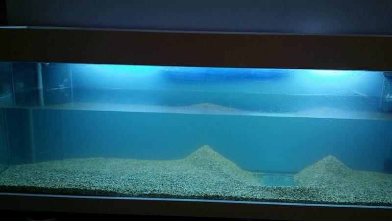 aquarium 800litres 19190810