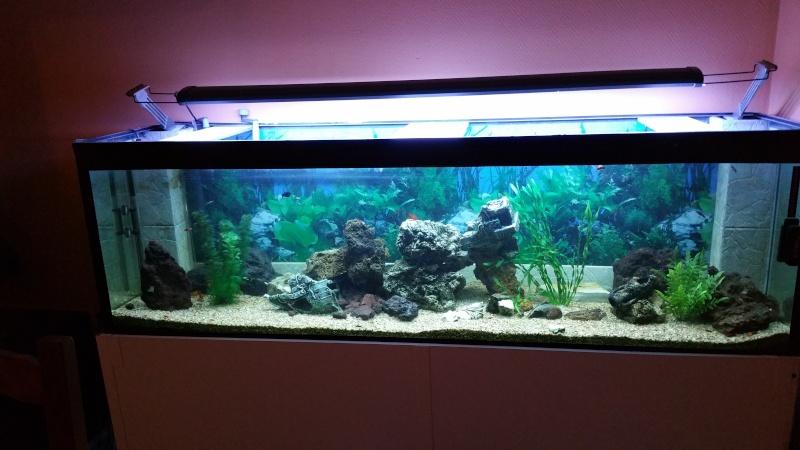 aquarium 800litres 20151214