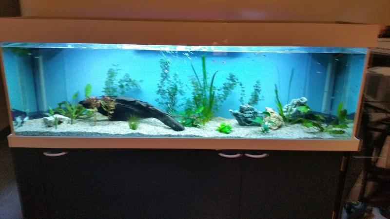 aquarium 800litres 20151221