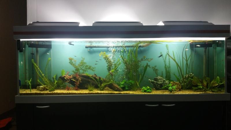 aquarium 800litres 20160210