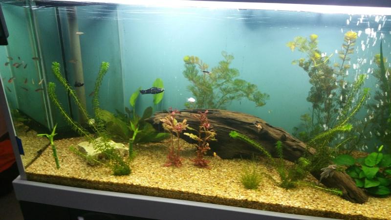 aquarium 800litres 20160211