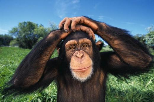 Raaaaaaaah!!! - Page 3 Chimpa10