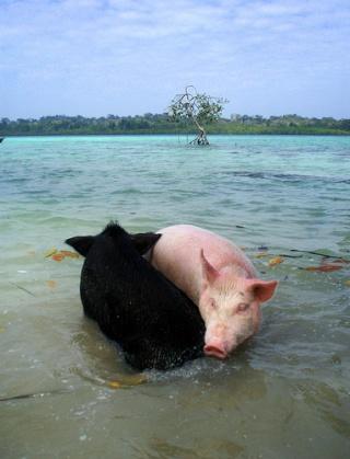 Images pour Piggy ! - Page 2 37627310