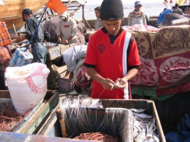 La pêche ,le poisson,les marins et l'activité au port - Page 2 11557910