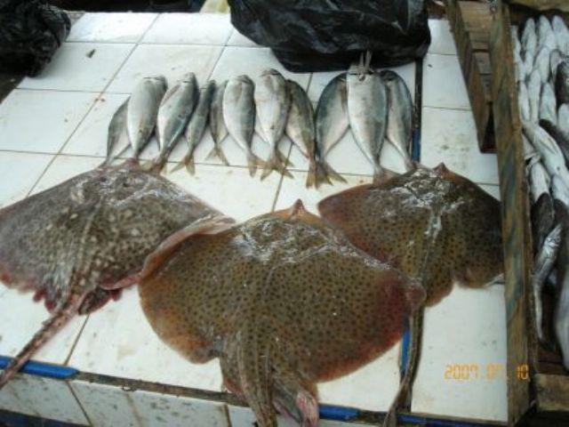 La pêche ,le poisson,les marins et l'activité au port 11566212