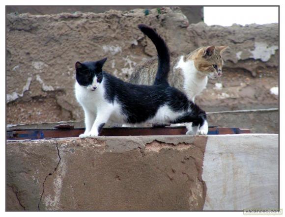 Les Chats d'Essouira 46855210