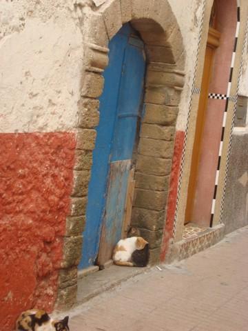 Les Chats d'Essouira Dsc04110