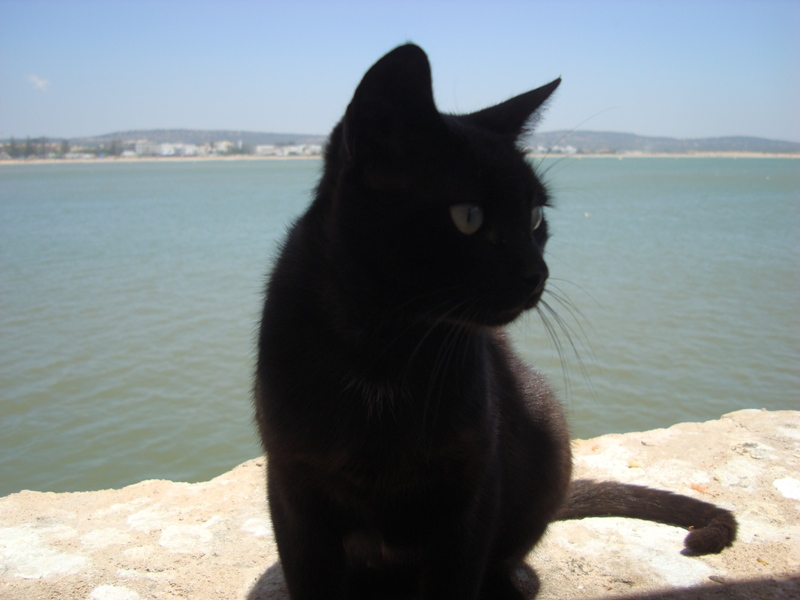 Les Chats d'Essouira Dsc05620