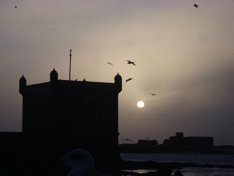 Les couchers de soleil de fin d'année 2010 Dsc07510
