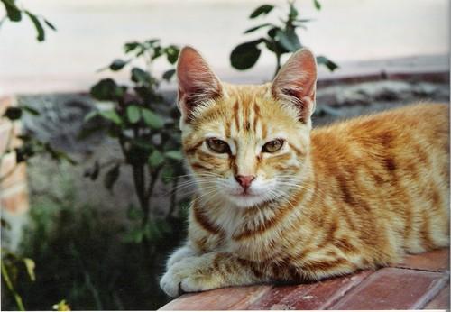 Les Chats d'Essouira M-chat10