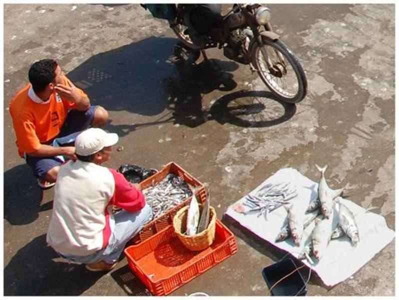 La pêche ,le poisson,les marins et l'activité au port - Page 2 Thumb_19