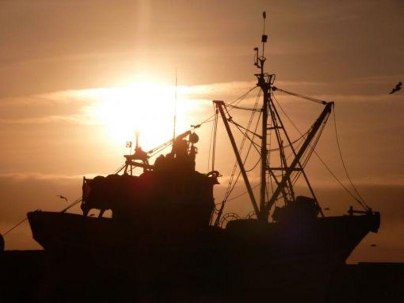 La pêche ,le poisson,les marins et l'activité au port Thumb_24