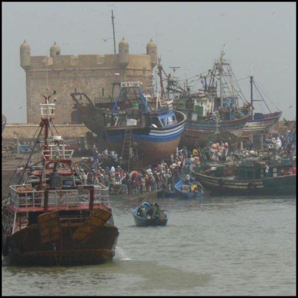 La pêche ,le poisson,les marins et l'activité au port Thumb_25