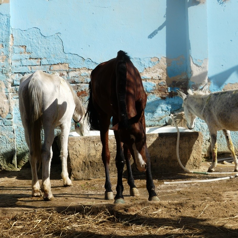 De retour du Caire ..... P1020116