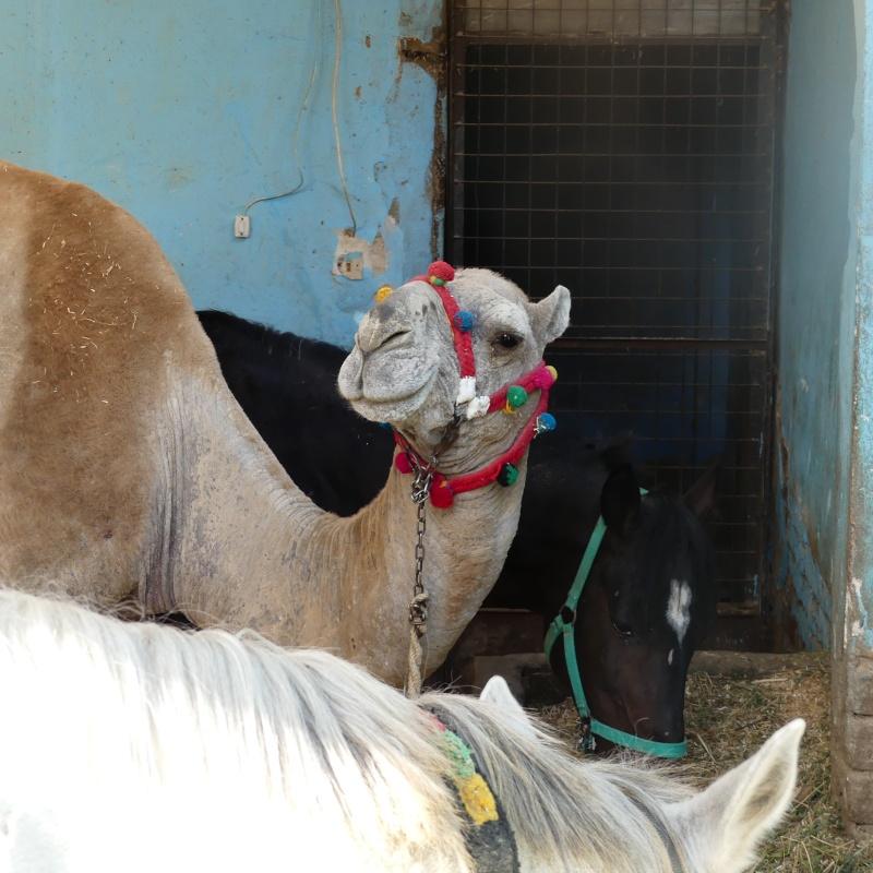 De retour du Caire ..... P1020214