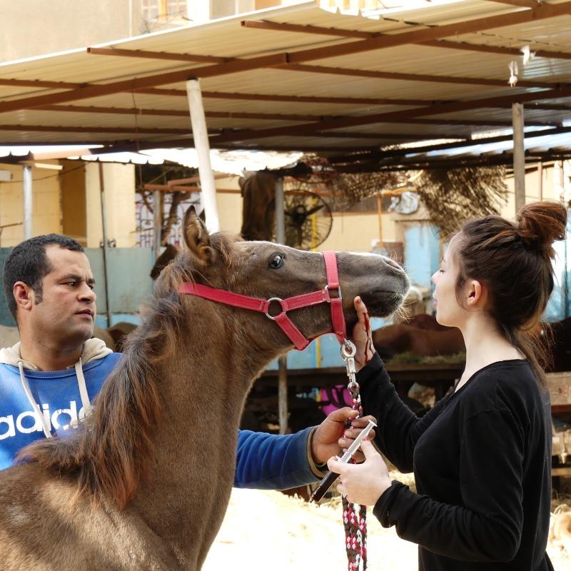 De retour du Caire ..... P1020217
