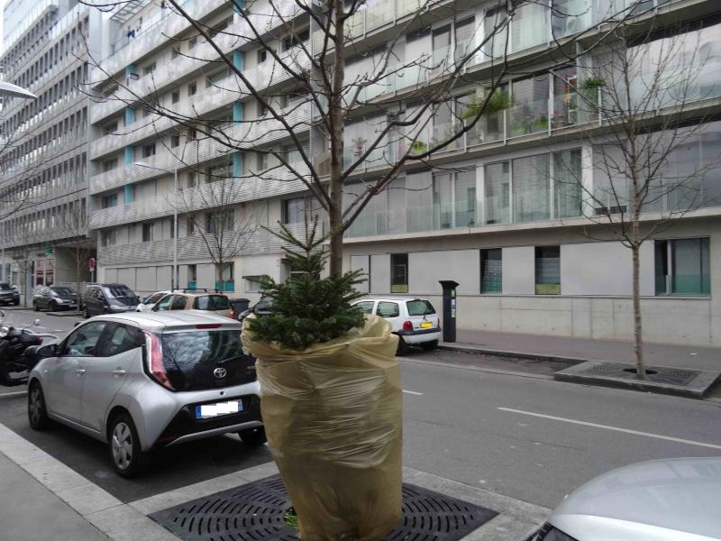 Collecte de sapins par Grand Paris Seine Ouest (GPSO) - Page 2 Dsc04133