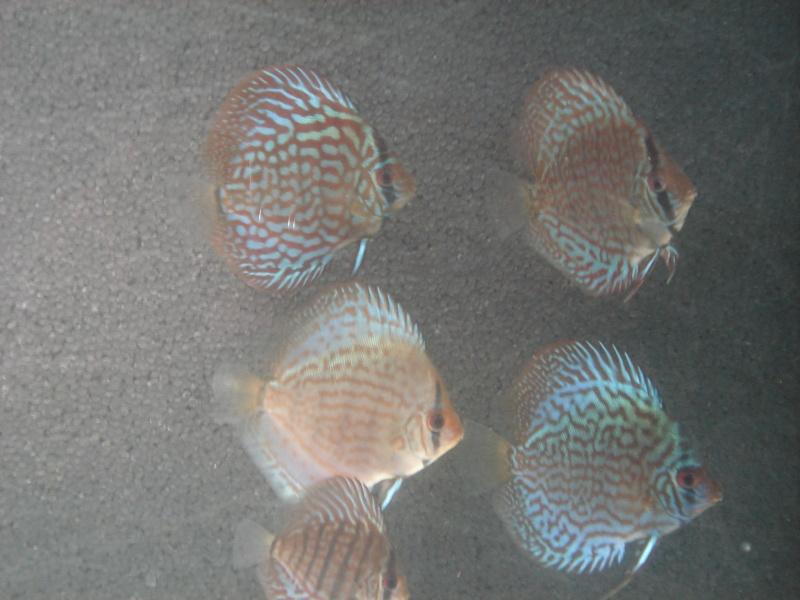 Evolution des discus Dsc06410