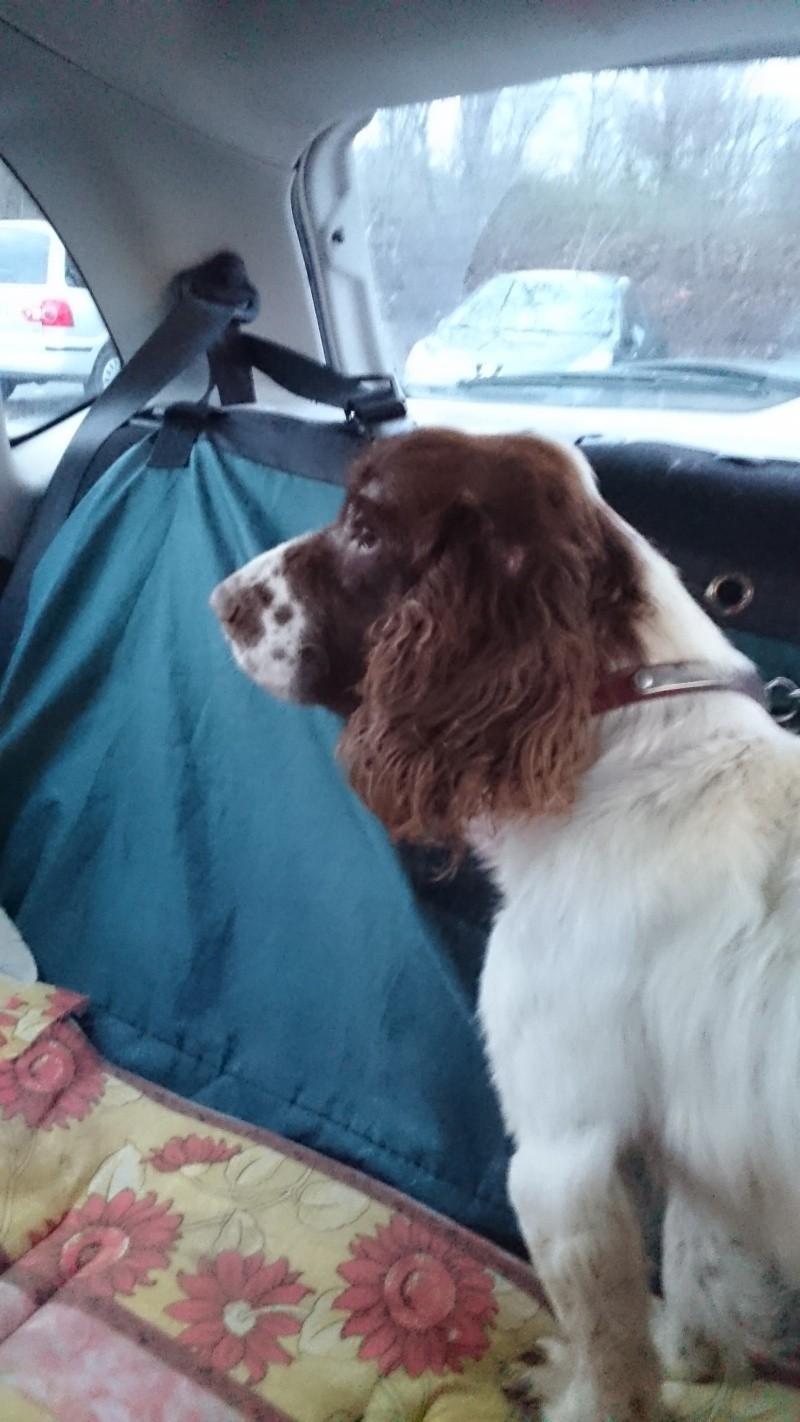 Trouvé !!!recherche co voiturage mercredi après midi  pour  chien (sortie de fourrière ) de Betton  à Porcaro Dsc_0011
