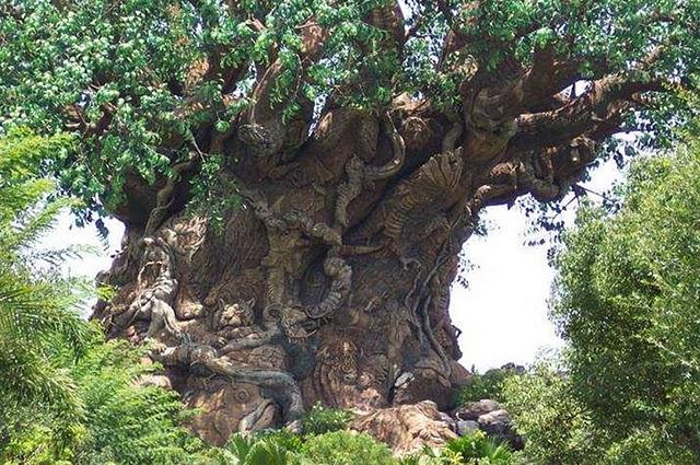 l'arbre de Noé au Mozambique Arbre_10