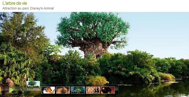 l'arbre de Noé au Mozambique Arbre_11