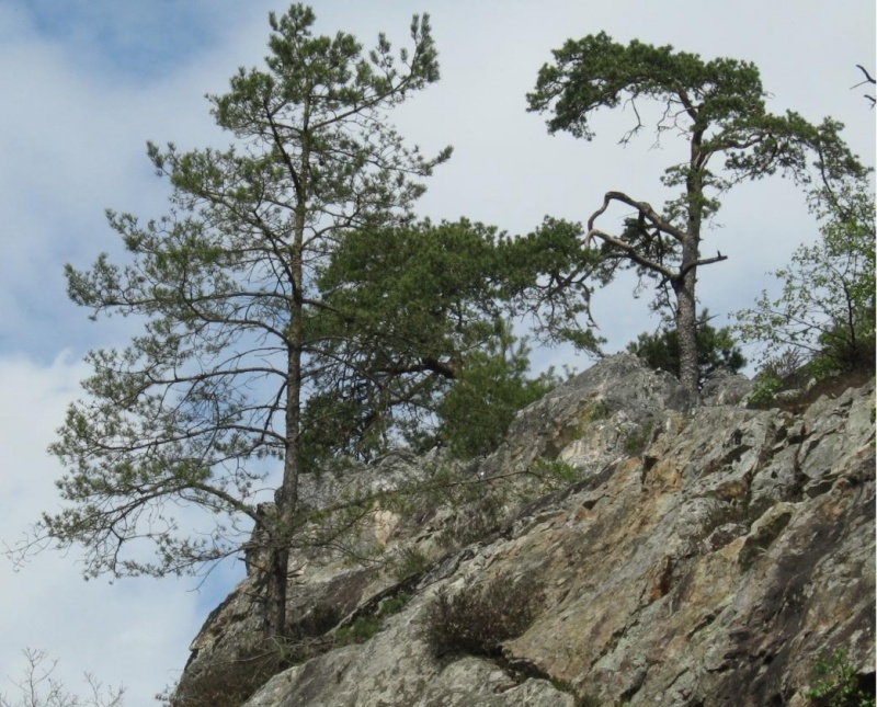 Forêt communale de Flers 25_04_11