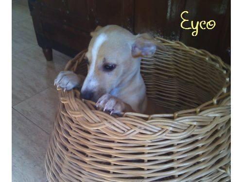 EYCO - croisé- Albacete 12219411
