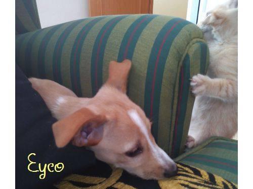 EYCO - croisé- Albacete 12227010