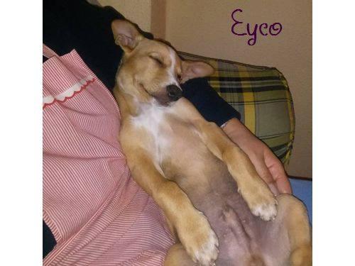 EYCO - croisé- Albacete 12234810