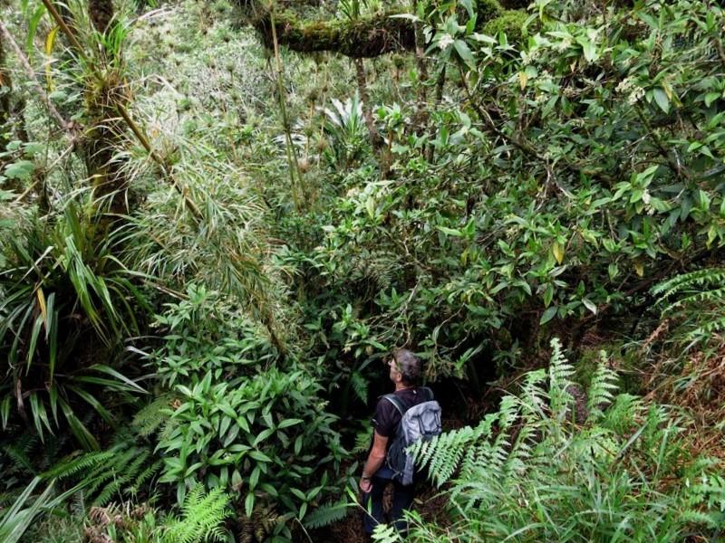 La Réunion automne 2015 10_pit10