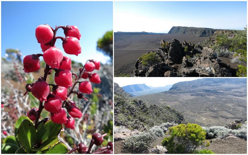 La Réunion automne 2015 17_pla10