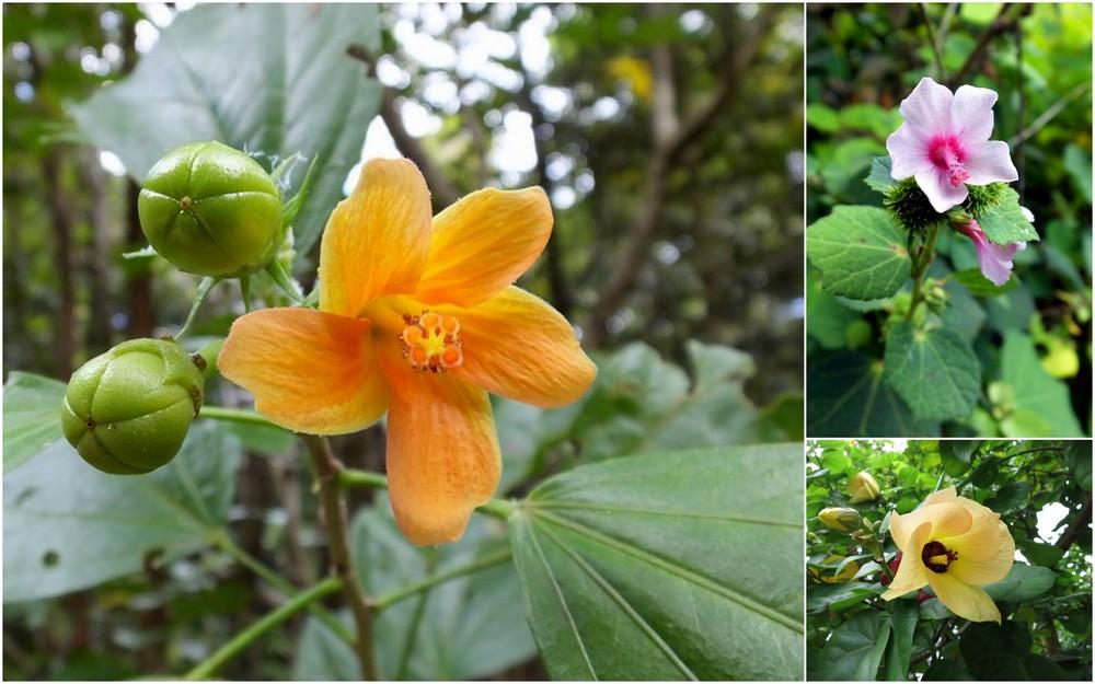 La Réunion automne 2015 25_mal10