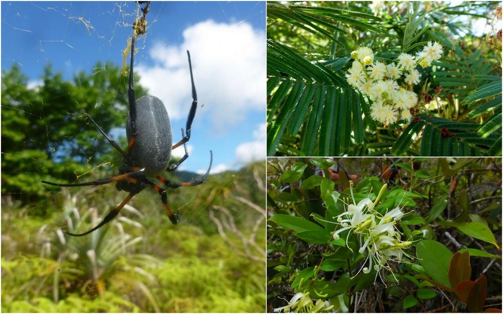 La Réunion automne 2015 27_bib10