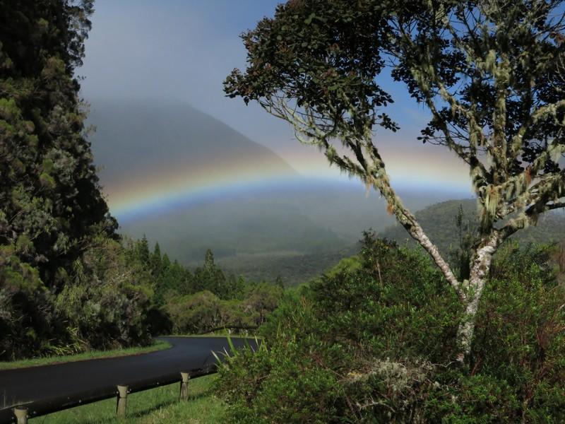 La Réunion automne 2015 2_palm10