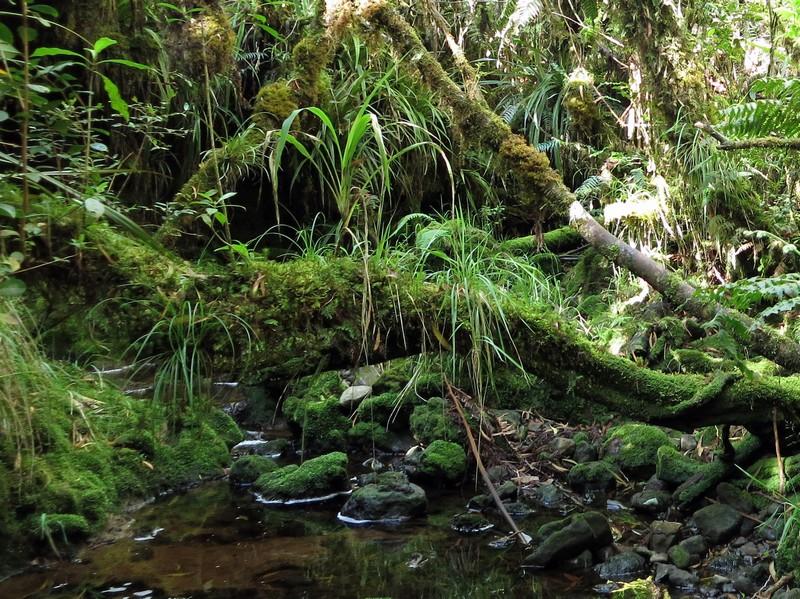 La Réunion automne 2015 5_sent10