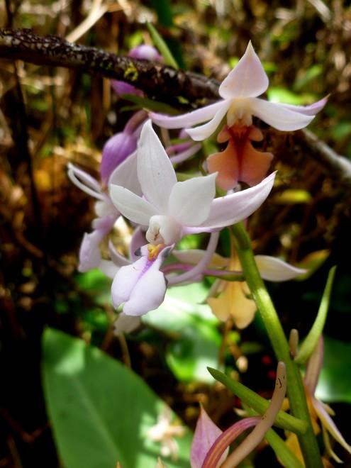 La Réunion automne 2015 66_cal10