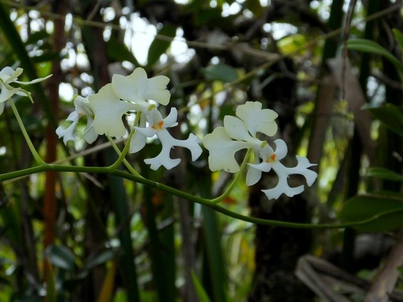 La Réunion automne 2015 71_cry11